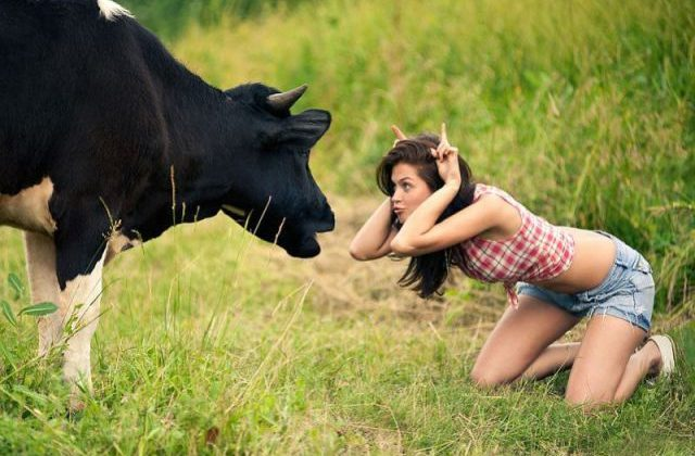 galician girl and cow